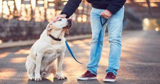 köpek eğitimi, köpek nasıl eğitilir, köpek eğitimi nasıl verilmeli