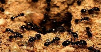 karınca ilaçlaması, karınca nasıl ilaçlanır, karınca nasıl bir canlı