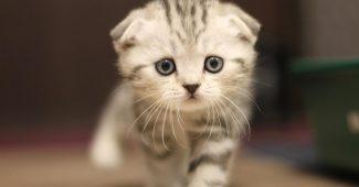 rüyada kedi görmenin anlamı, rüyada kedi görmek ne anlama gelir, rüyada görülen kedinin anlamı
